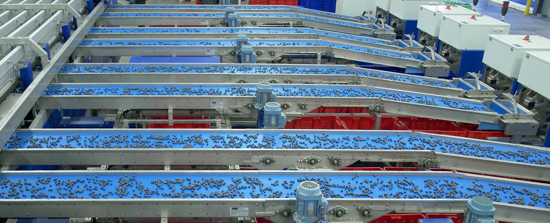 UNITEC blueberry sorting line